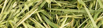 green-oats_1-strip